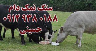 خرید سنگ نمک برای گاو